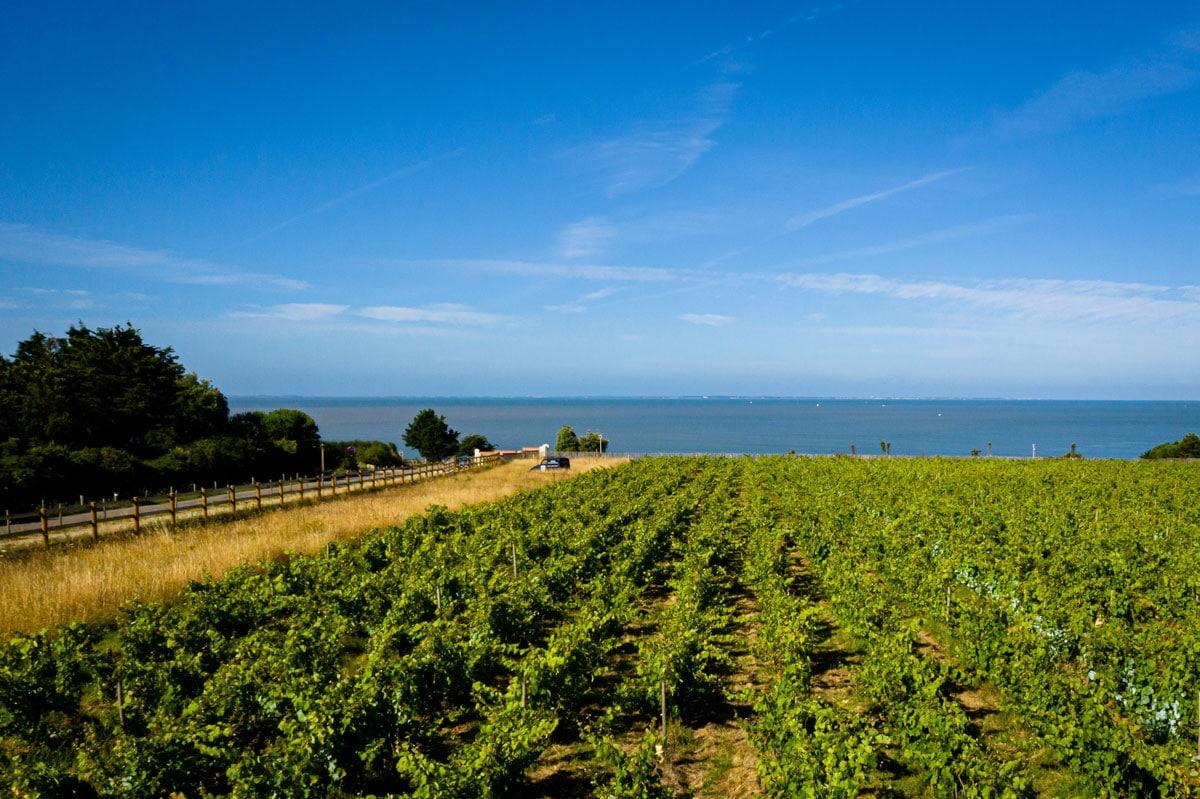 Vignes et vins séminaire